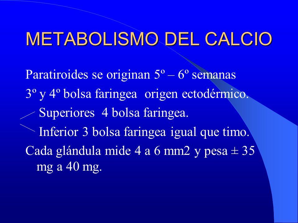 Paratiroides se originan 5º – 6º semanas 3º y 4º bolsa faringea origen ectodérmico. Superiores 4 bolsa faringea. Inferior 3 bolsa faringea igual que t