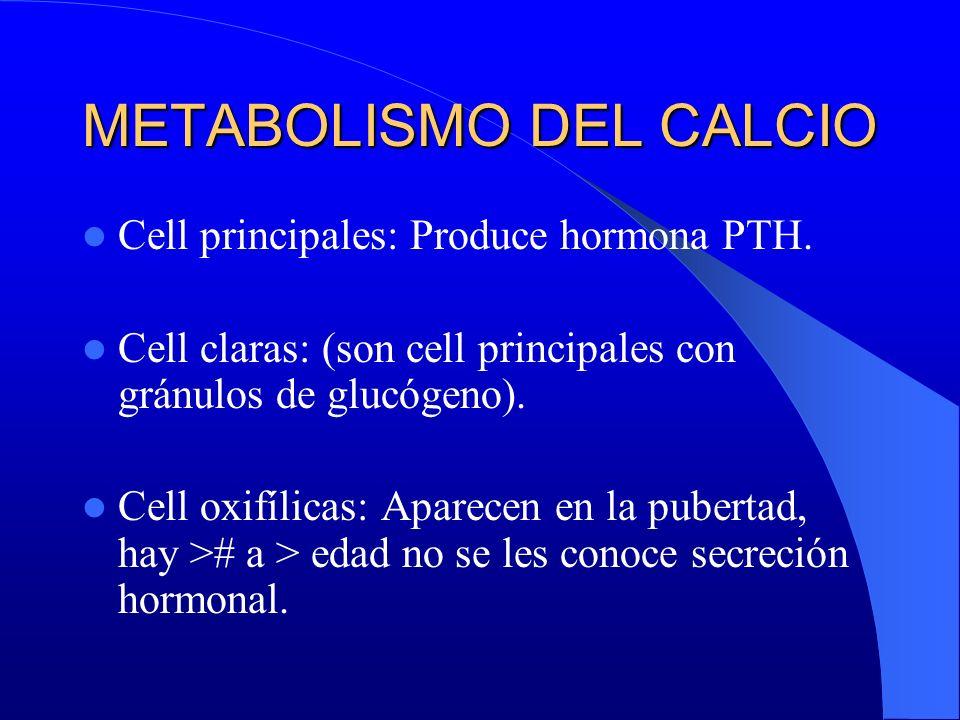 METABOLISMO DEL CALCIO Cell principales: Produce hormona PTH. Cell claras: (son cell principales con gránulos de glucógeno). Cell oxifílicas: Aparecen