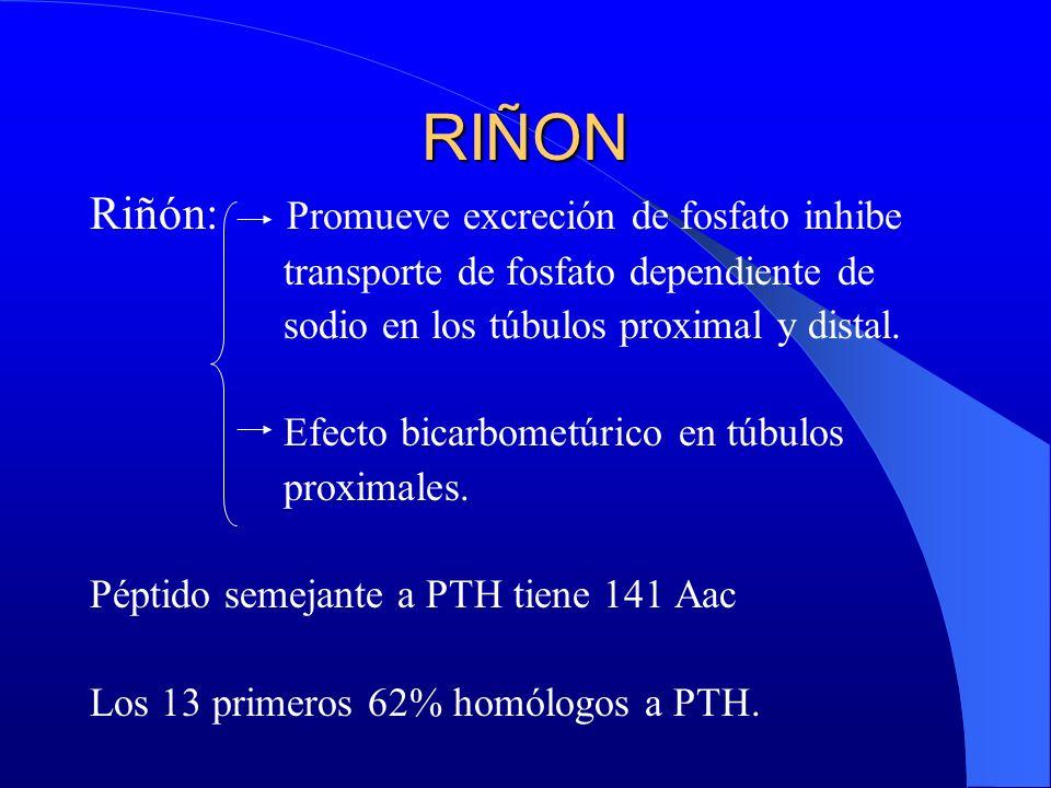RIÑON Riñón: Promueve excreción de fosfato inhibe transporte de fosfato dependiente de sodio en los túbulos proximal y distal. Efecto bicarbometúrico