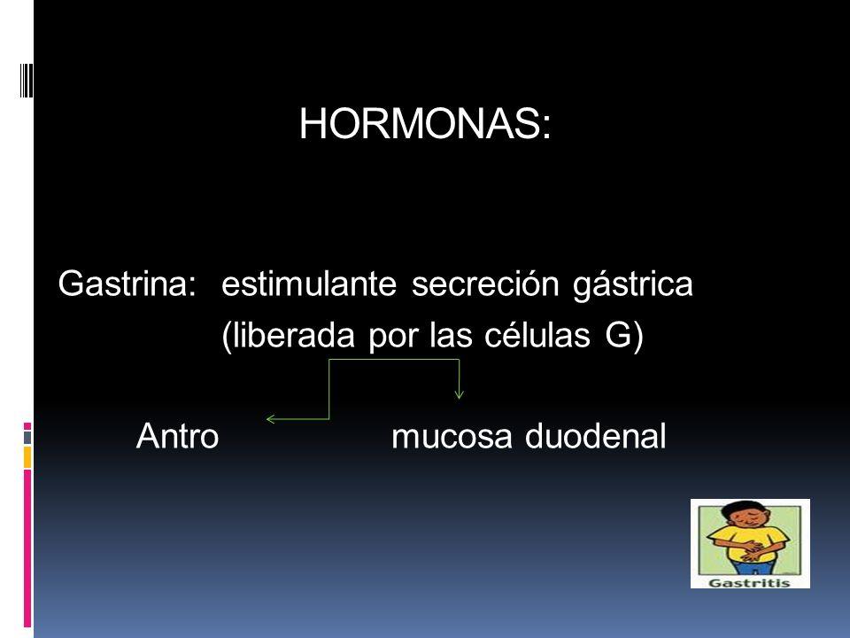 HORMONAS: Gastrina: estimulante secreción gástrica (liberada por las células G) Antromucosa duodenal
