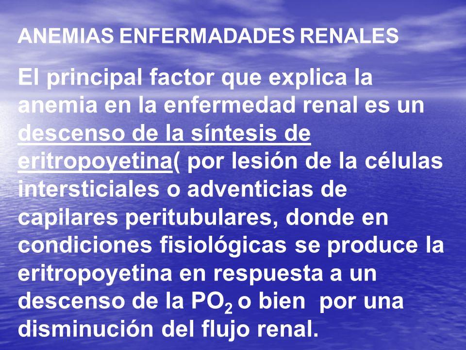 ANEMIAS ENFERMADADES RENALES El principal factor que explica la anemia en la enfermedad renal es un descenso de la síntesis de eritropoyetina( por les