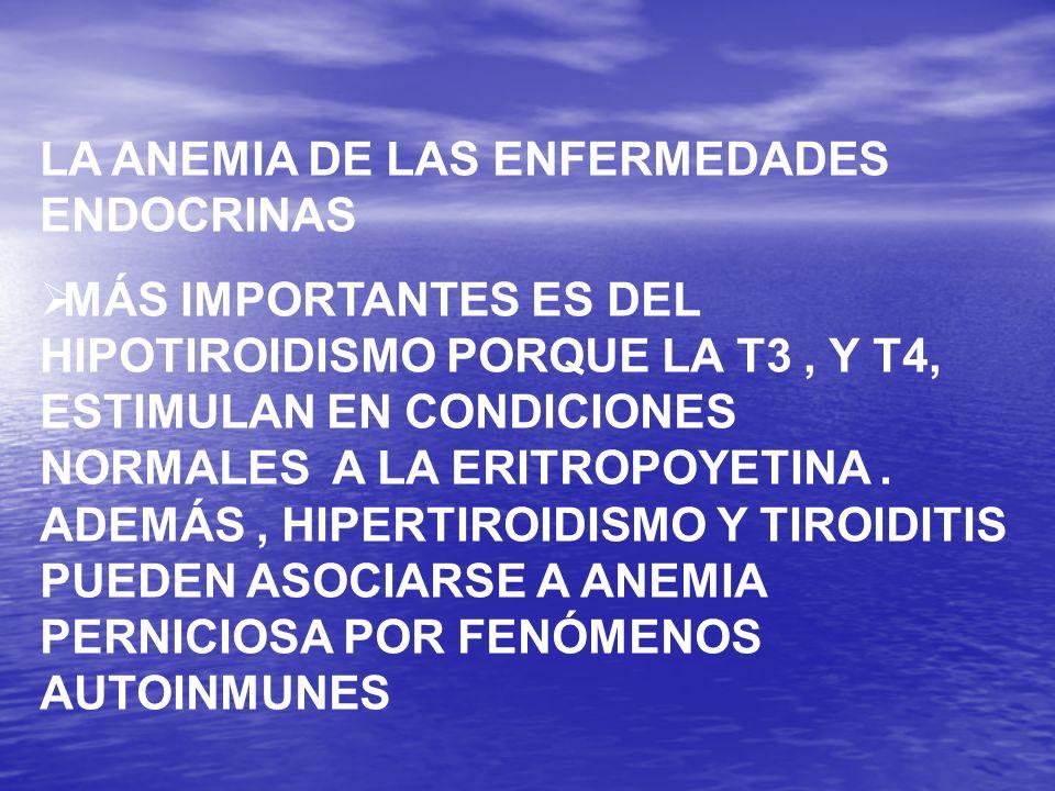 LA ANEMIA DE LAS ENFERMEDADES ENDOCRINAS MÁS IMPORTANTES ES DEL HIPOTIROIDISMO PORQUE LA T3, Y T4, ESTIMULAN EN CONDICIONES NORMALES A LA ERITROPOYETI