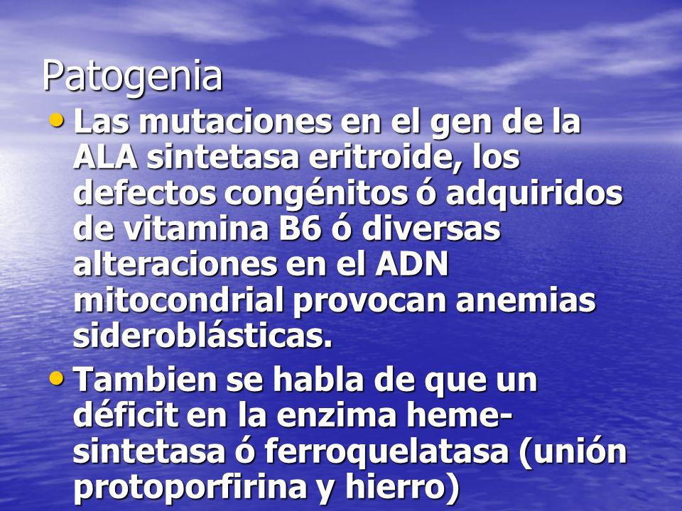 Patogenia Las mutaciones en el gen de la ALA sintetasa eritroide, los defectos congénitos ó adquiridos de vitamina B6 ó diversas alteraciones en el AD
