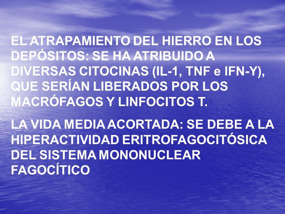 ALCOHOL: (TRIPLE MECANISMO MALA ALIMENTACIÓN TOXICIDAD HEMATOPOYÉTICA TRANSTORNOS SIDEROBLÁSTICOS HEMÓLISIS: (p.e.