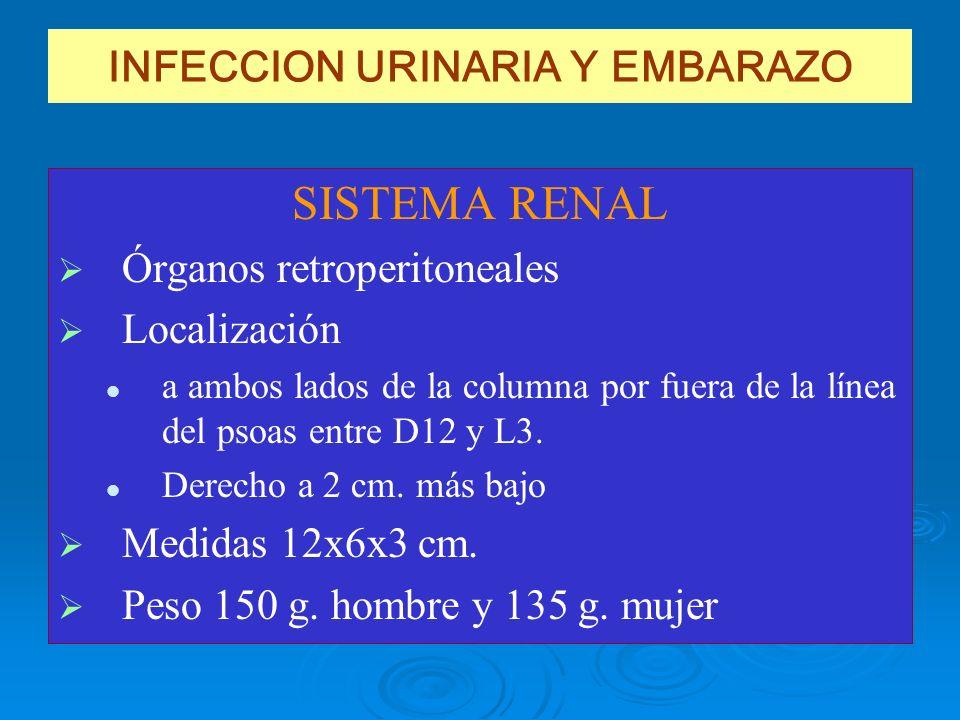 INFECCION URINARIA Y EMBARAZO SISTEMA RENAL Órganos retroperitoneales Localización a ambos lados de la columna por fuera de la línea del psoas entre D