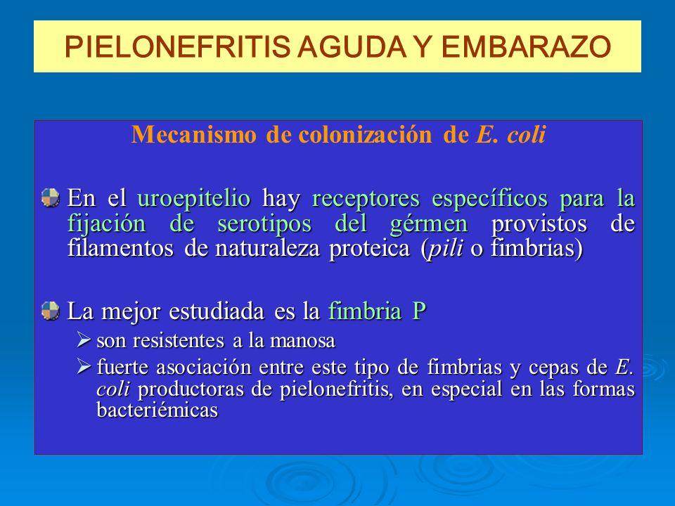 PIELONEFRITIS AGUDA Y EMBARAZO Mecanismo de colonización de E. coli En el uroepitelio hay receptores específicos para la fijación de serotipos del gér