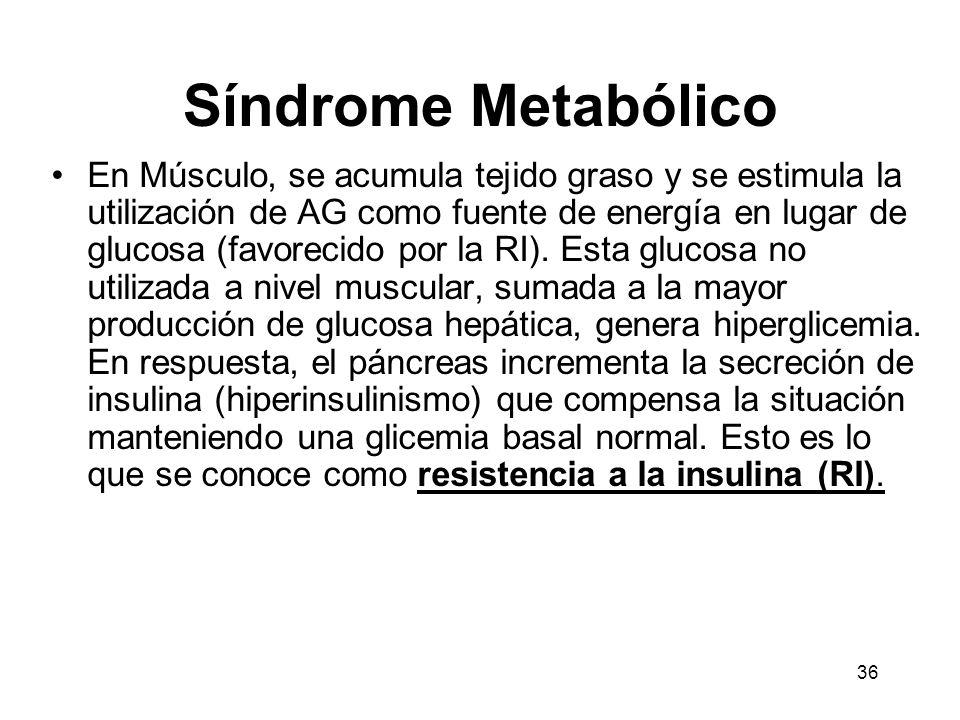 36 Síndrome Metabólico En Músculo, se acumula tejido graso y se estimula la utilización de AG como fuente de energía en lugar de glucosa (favorecido p