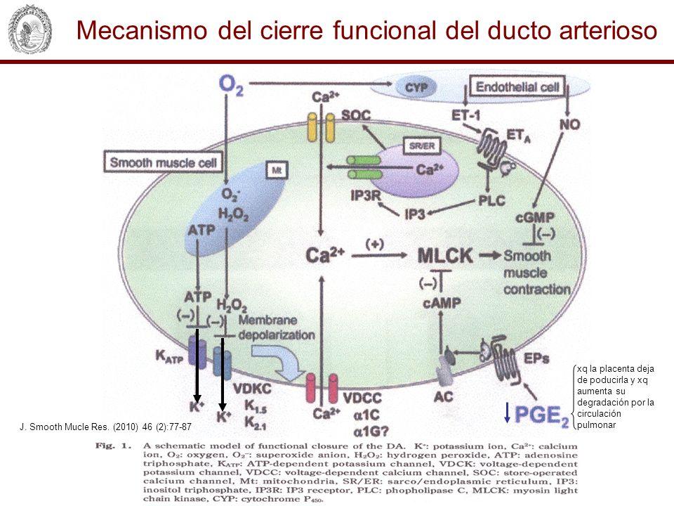 Mecanismo del cierre funcional del ducto arterioso J. Smooth Mucle Res. (2010) 46 (2):77-87 xq la placenta deja de poducirla y xq aumenta su degradaci