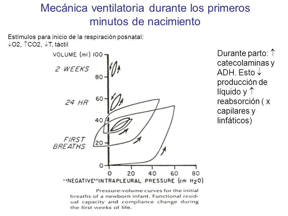 Mecánica ventilatoria durante los primeros minutos de nacimiento Durante parto: catecolaminas y ADH. Esto producción de líquido y reabsorción ( x capi