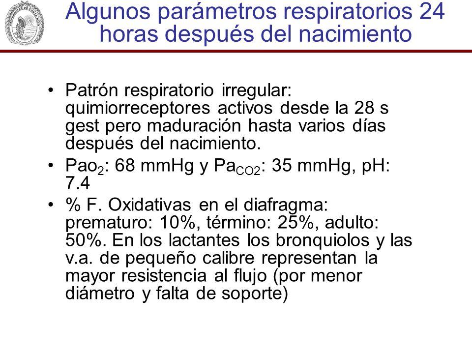 Algunos parámetros respiratorios 24 horas después del nacimiento Patrón respiratorio irregular: quimiorreceptores activos desde la 28 s gest pero madu