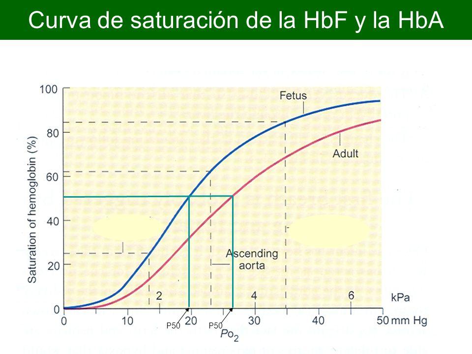 Curva de saturación de la HbF y la HbA P50