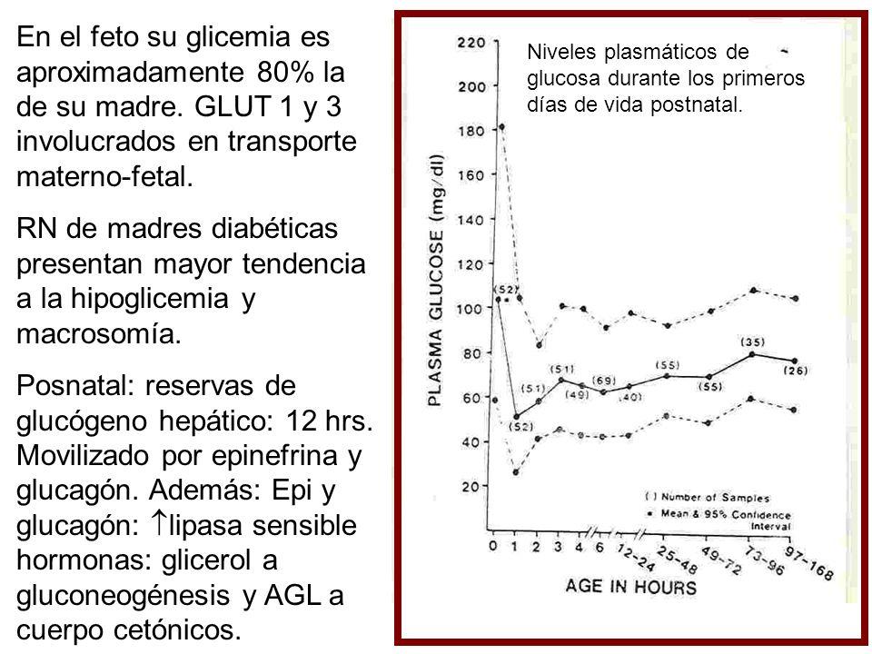 En el feto su glicemia es aproximadamente 80% la de su madre. GLUT 1 y 3 involucrados en transporte materno-fetal. RN de madres diabéticas presentan m