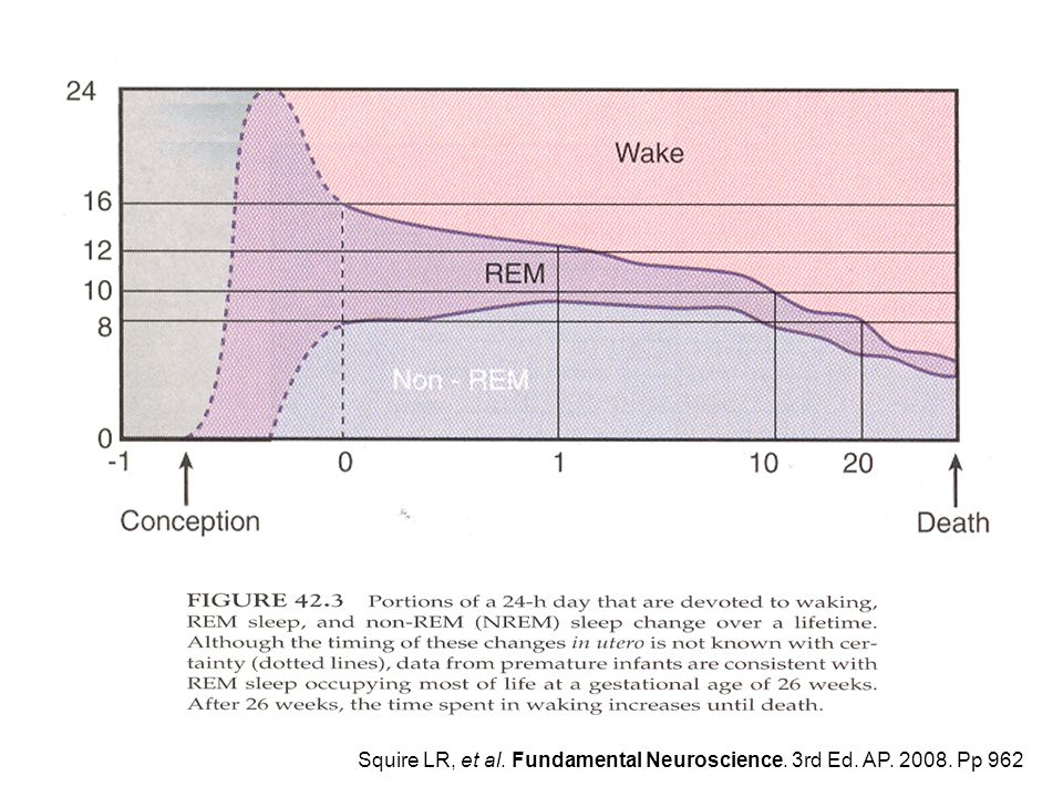Squire LR, et al. Fundamental Neuroscience. 3rd Ed. AP. 2008. Pp 962