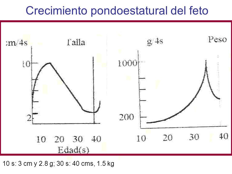 Crecimiento pondoestatural del feto 10 s: 3 cm y 2.8 g; 30 s: 40 cms, 1.5 kg