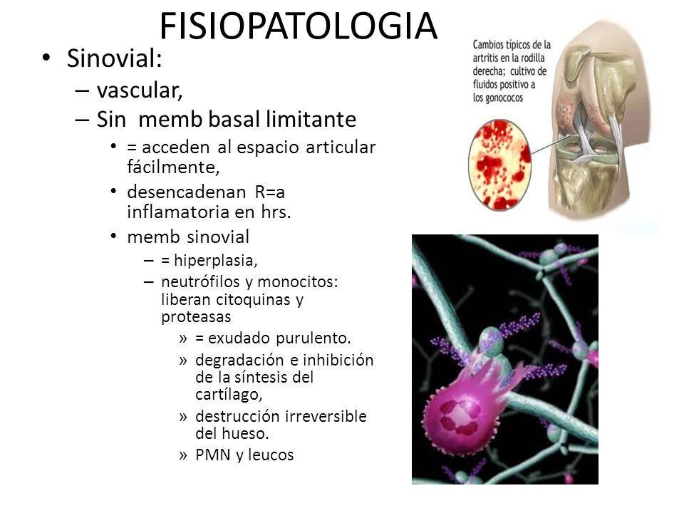 FISIOPATOLOGIA Sinovial: – vascular, – Sin memb basal limitante = acceden al espacio articular fácilmente, desencadenan R=a inflamatoria en hrs. memb