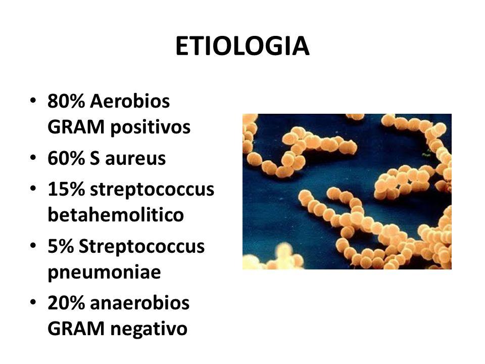 ETIOLOGIA 80% Aerobios GRAM positivos 60% S aureus 15% streptococcus betahemolitico 5% Streptococcus pneumoniae 20% anaerobios GRAM negativo