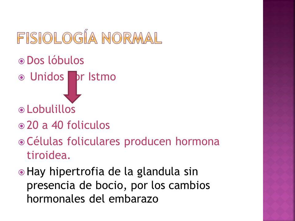 Dos lóbulos Unidos por Istmo Lobulillos 20 a 40 foliculos Células foliculares producen hormona tiroidea. Hay hipertrofia de la glandula sin presencia