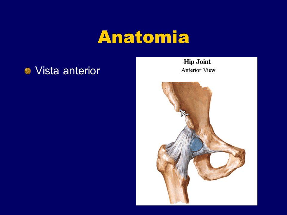 Anatomia Vista anterior