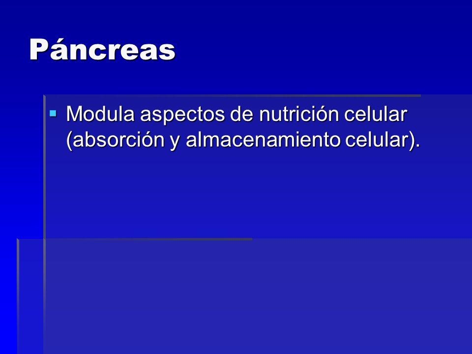 Páncreas Endocrino: Insulina Insulina Glucagón Glucagón Somatostatina Somatostatina Polipé´tido pancreático (VIP) Polipé´tido pancreático (VIP)Exocrino: Enzimas digestivas Enzimas digestivas
