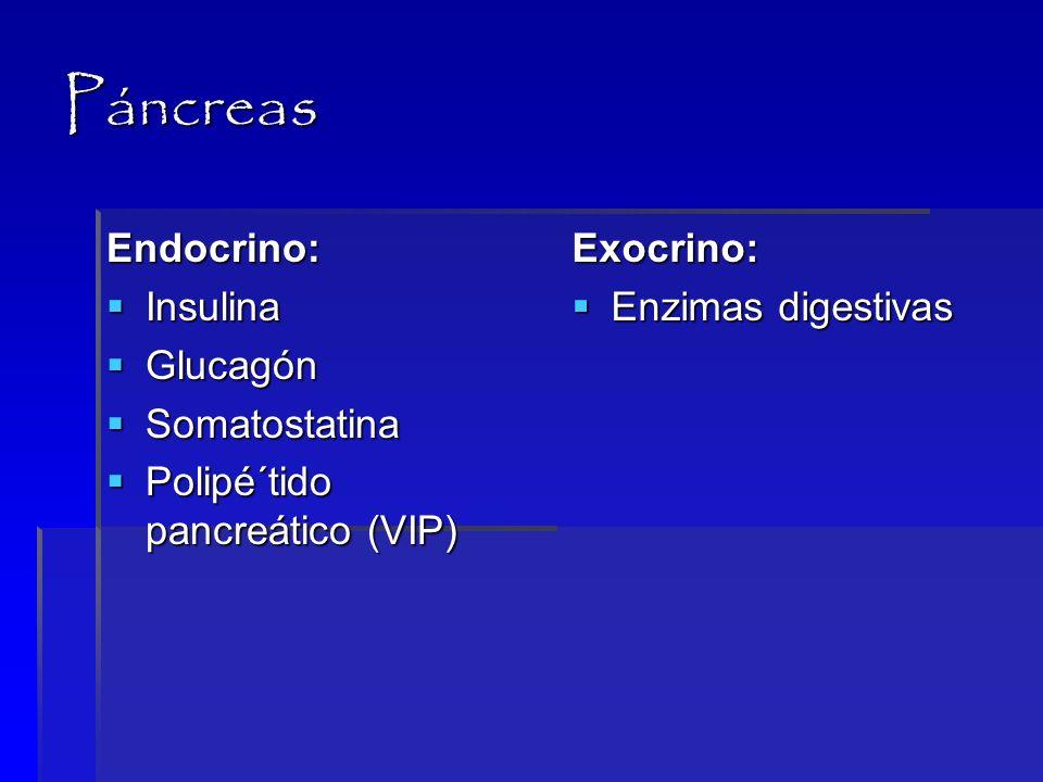 Pánceras Endocrino 0.7 a 1 millón de glándulas (islotes de Langerhans).