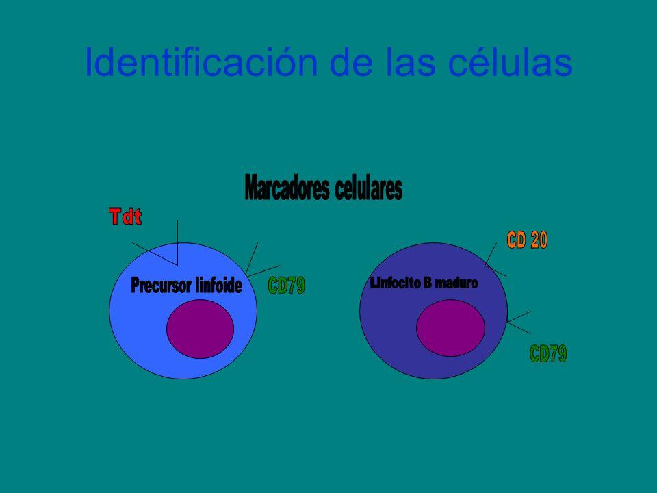 Identificación de las células