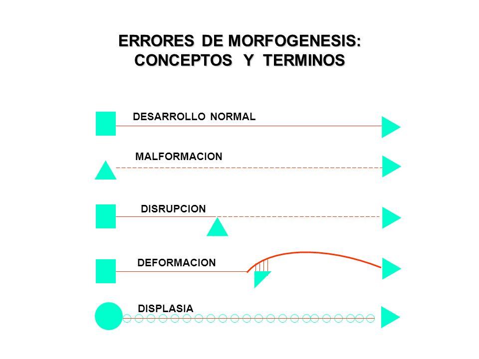 ERRORES DE MORFOGENESIS: CONCEPTOS Y TERMINOS DESARROLLO NORMAL MALFORMACION DISRUPCION DEFORMACION DISPLASIA