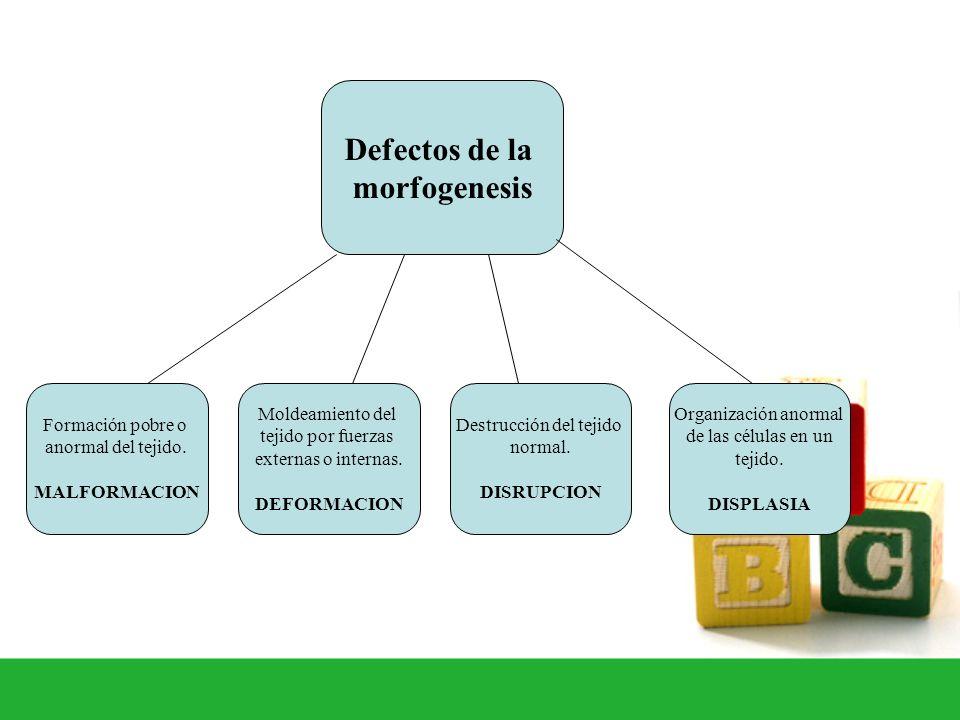 Formación pobre o anormal del tejido. MALFORMACION Destrucción del tejido normal. DISRUPCION Moldeamiento del tejido por fuerzas externas o internas.