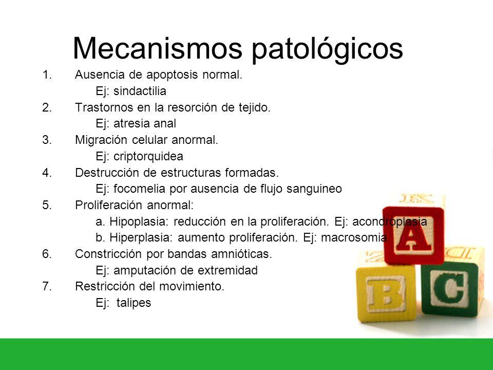 Mecanismos patológicos 1. Ausencia de apoptosis normal. Ej: sindactilia 2. Trastornos en la resorción de tejido. Ej: atresia anal 3. Migración celular