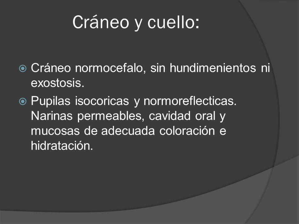 Cráneo y cuello: Cráneo normocefalo, sin hundimenientos ni exostosis. Pupilas isocoricas y normoreflecticas. Narinas permeables, cavidad oral y mucosa