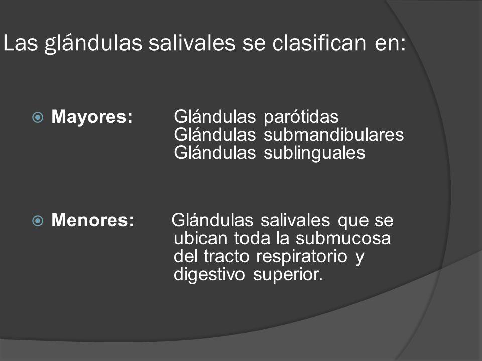 Las glándulas salivales se clasifican en: Mayores:Glándulas parótidas Glándulas submandibulares Glándulas sublinguales Menores: Glándulas salivales qu