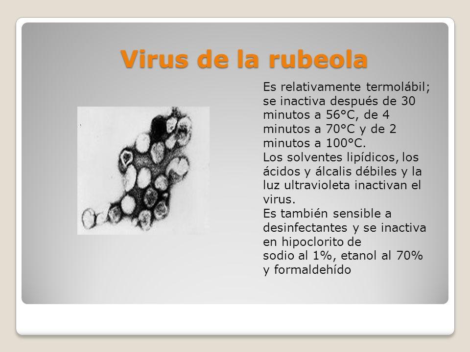 Virus de la rubeola Es relativamente termolábil; se inactiva después de 30 minutos a 56°C, de 4 minutos a 70°C y de 2 minutos a 100°C. Los solventes l