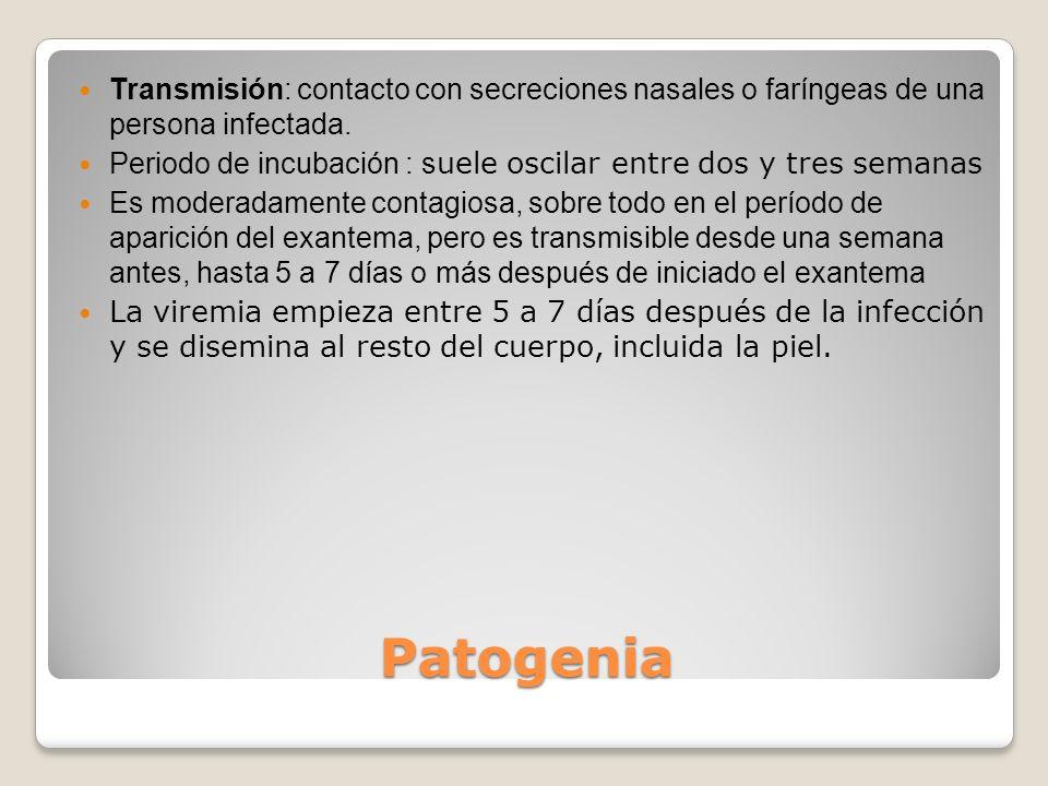Patogenia Transmisión: contacto con secreciones nasales o faríngeas de una persona infectada. Periodo de incubación : s uele oscilar entre dos y tres