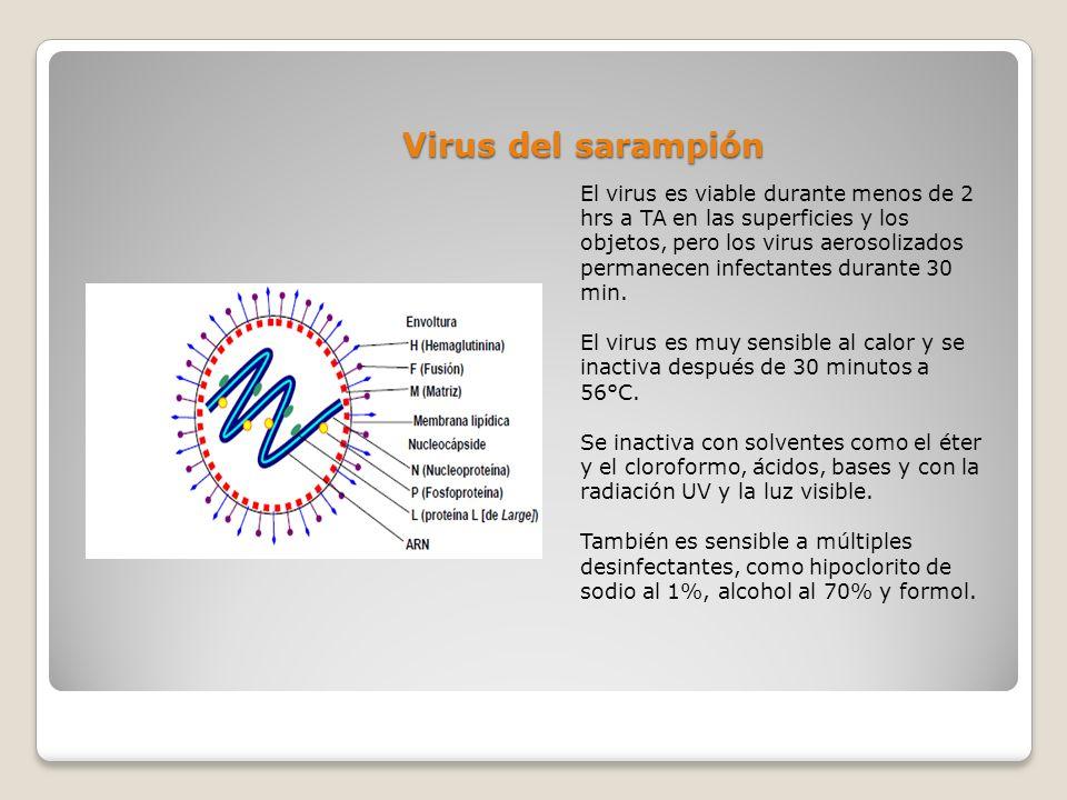 Virus del sarampión El virus es viable durante menos de 2 hrs a TA en las superficies y los objetos, pero los virus aerosolizados permanecen infectant