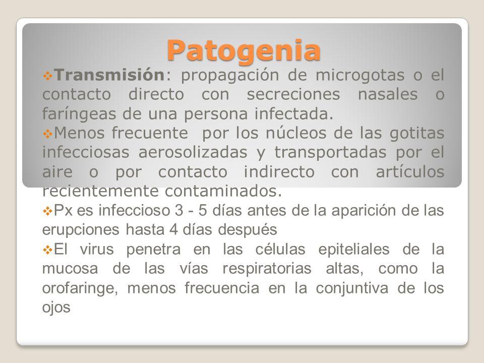 Patogenia Transmisión: propagación de microgotas o el contacto directo con secreciones nasales o faríngeas de una persona infectada. Menos frecuente p