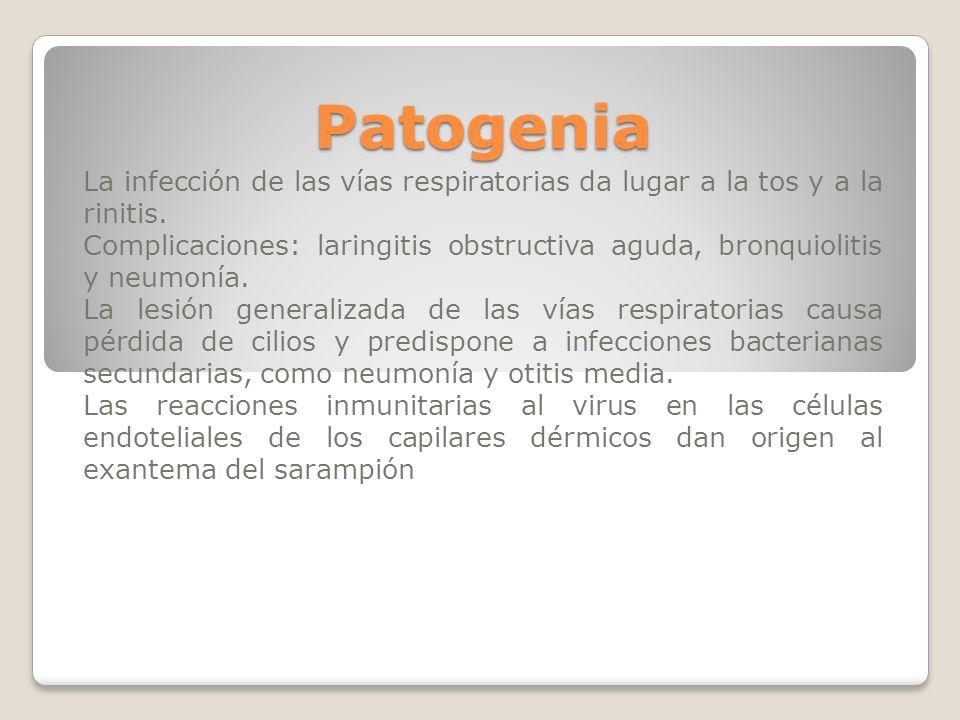 Patogenia La infección de las vías respiratorias da lugar a la tos y a la rinitis. Complicaciones: laringitis obstructiva aguda, bronquiolitis y neumo