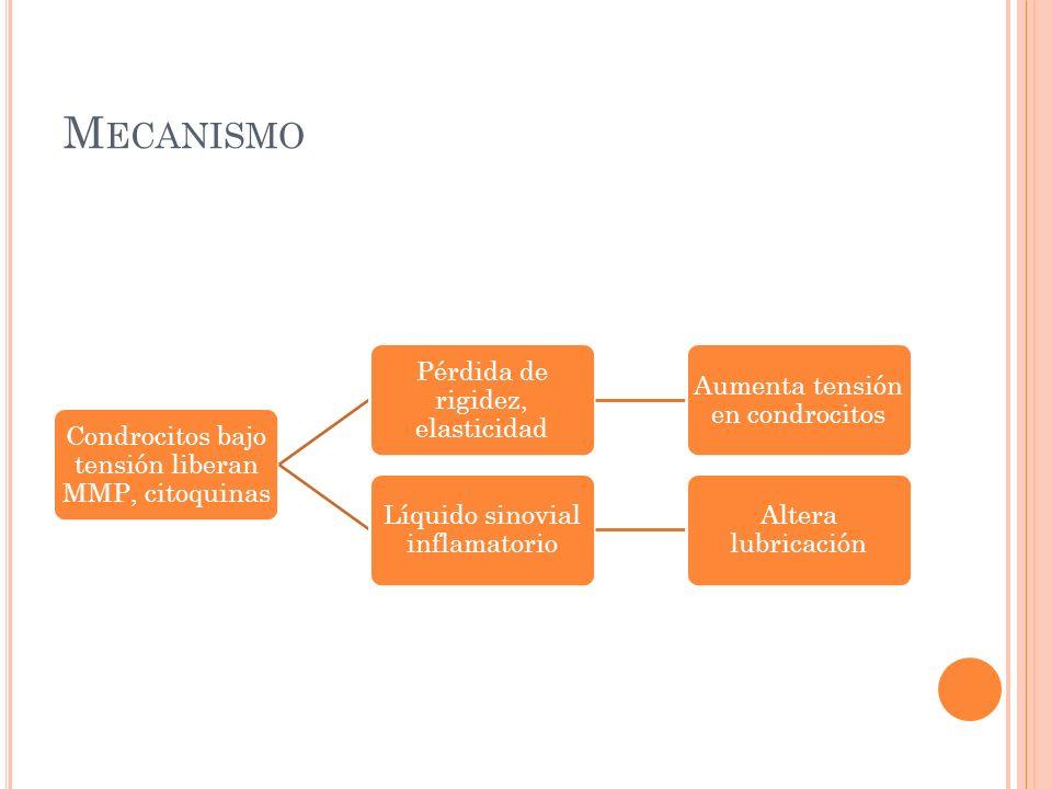 M ECANISMO Condrocitos bajo tensión liberan MMP, citoquinas Pérdida de rigidez, elasticidad Aumenta tensión en condrocitos Líquido sinovial inflamator