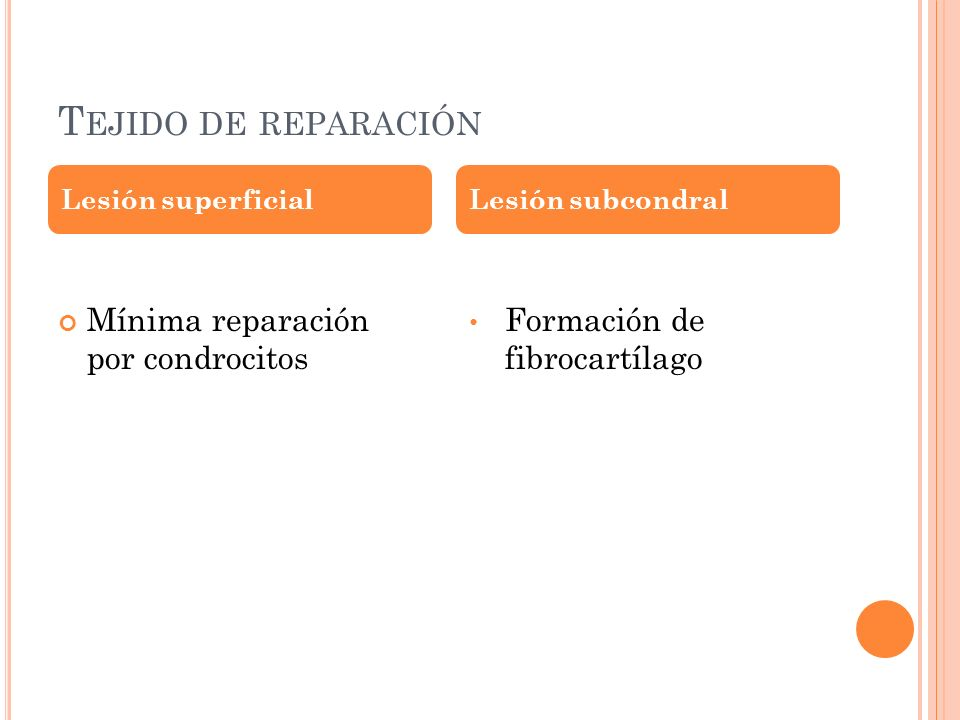 T EJIDO DE REPARACIÓN Mínima reparación por condrocitos Formación de fibrocartílago Lesión superficialLesión subcondral