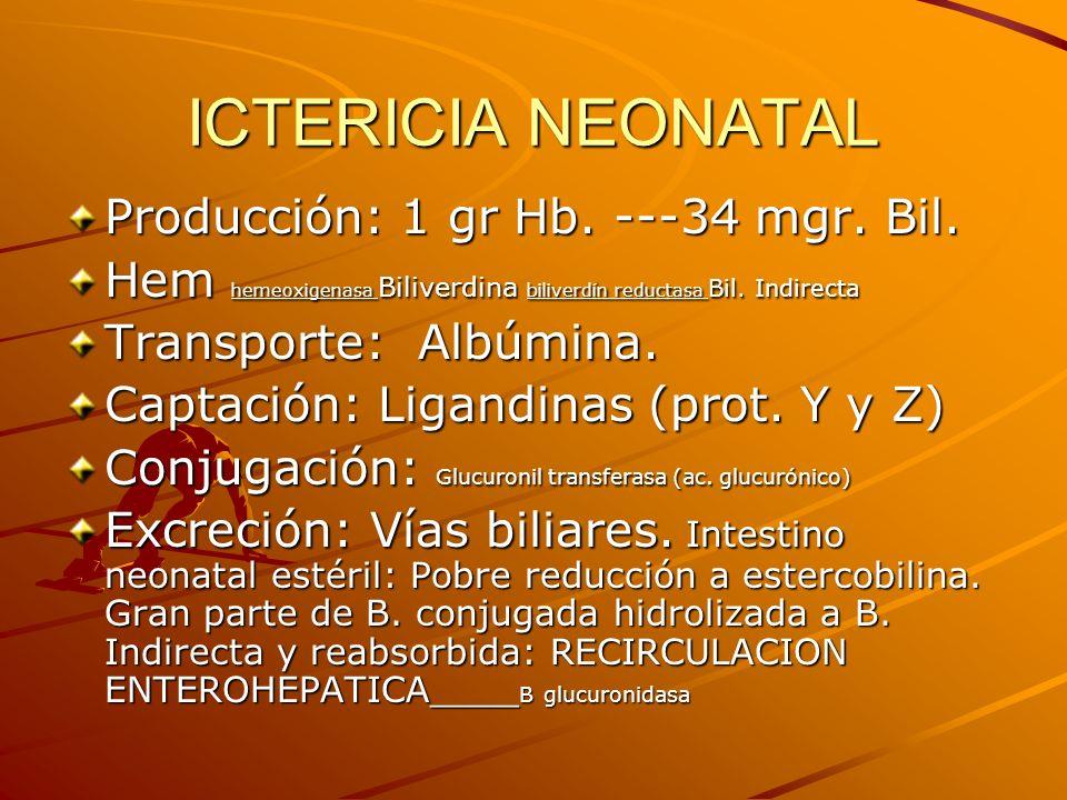 ICTERICIA NEONATAL Producción: 1 gr Hb. ---34 mgr. Bil. Hem hemeoxigenasa Biliverdina biliverdín reductasa Bil. Indirecta Transporte: Albúmina. Captac
