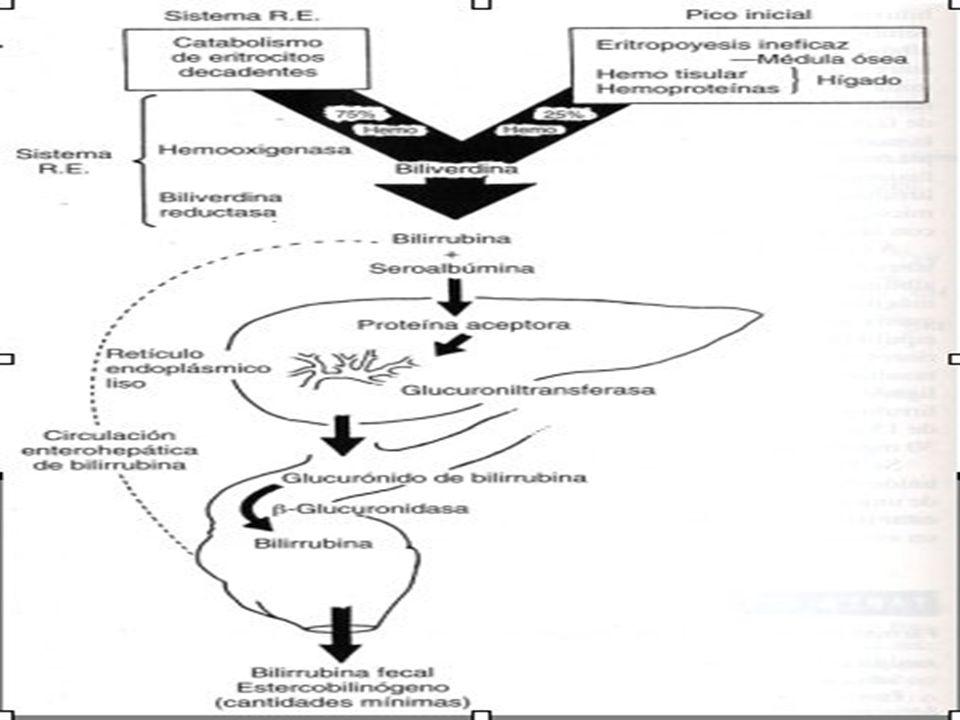 ICTERICIA NEONATAL Enfermedad hemolítica Incomp.