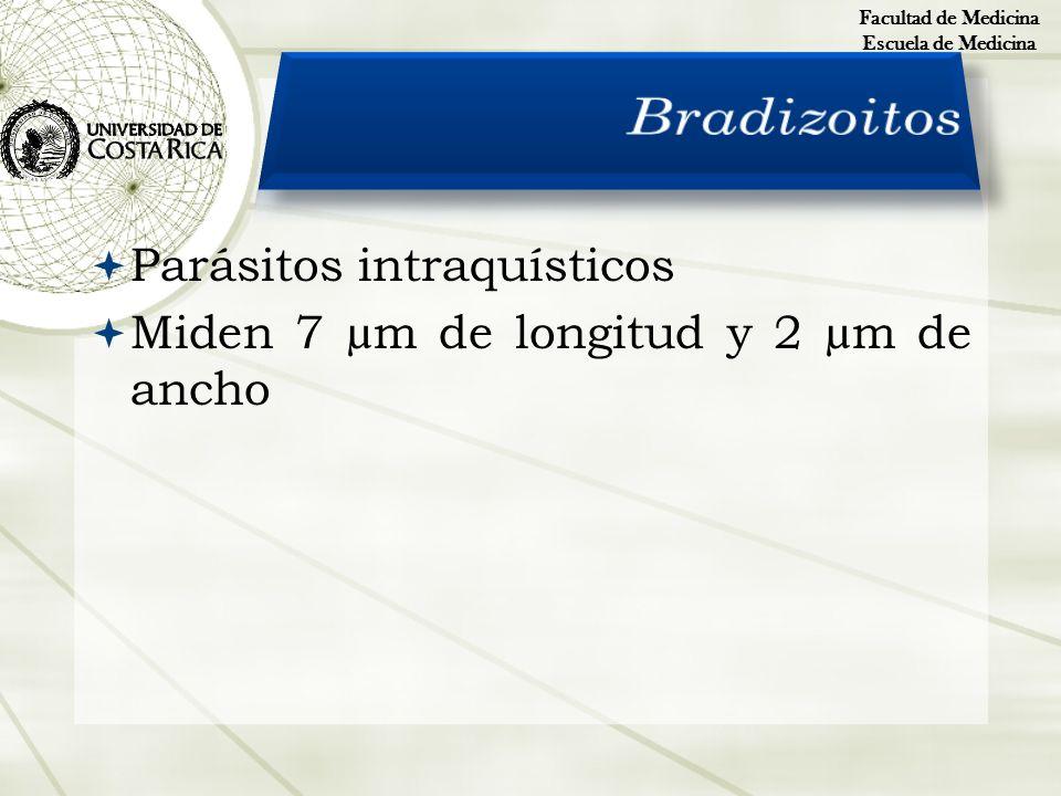 Parásitos intraquísticos Miden 7 µm de longitud y 2 µm de ancho Facultad de Medicina Escuela de Medicina