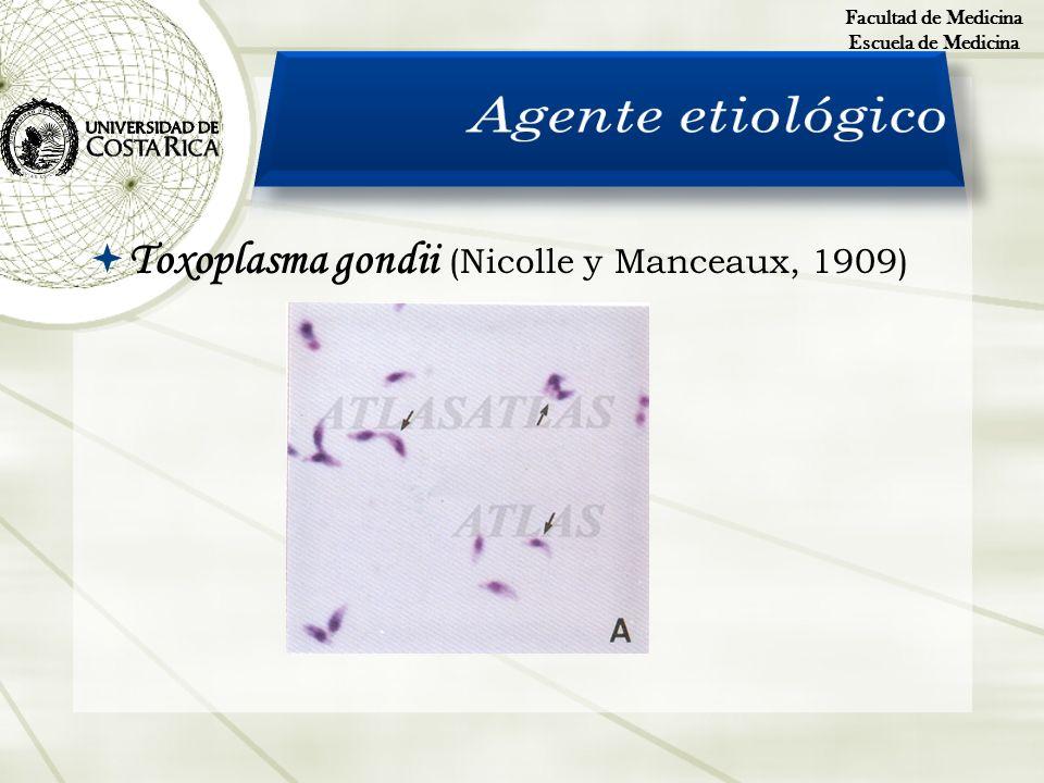 Toxoplasma gondii (Nicolle y Manceaux, 1909) Facultad de Medicina Escuela de Medicina