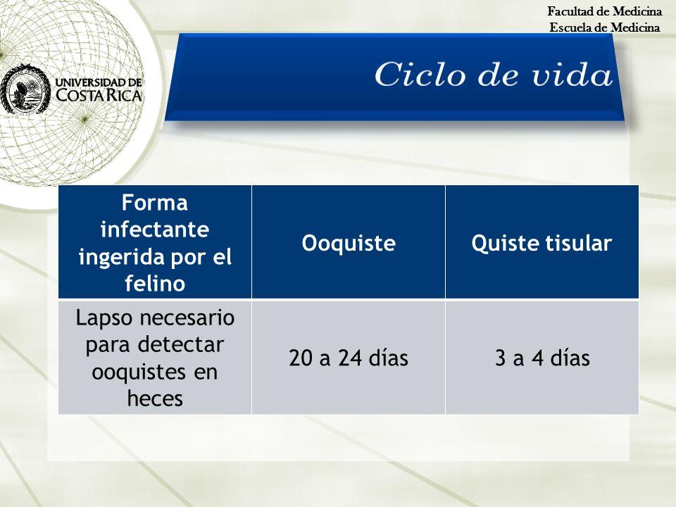 Facultad de Medicina Escuela de Medicina Forma infectante ingerida por el felino OoquisteQuiste tisular Lapso necesario para detectar ooquistes en hec