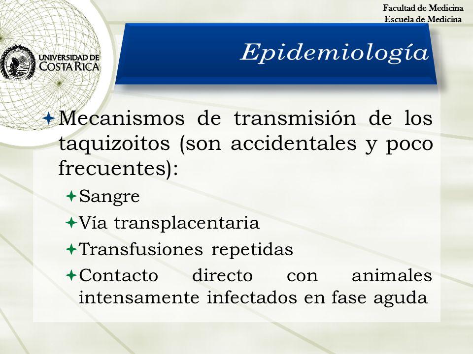 Mecanismos de transmisión de los taquizoitos (son accidentales y poco frecuentes): Sangre Vía transplacentaria Transfusiones repetidas Contacto direct