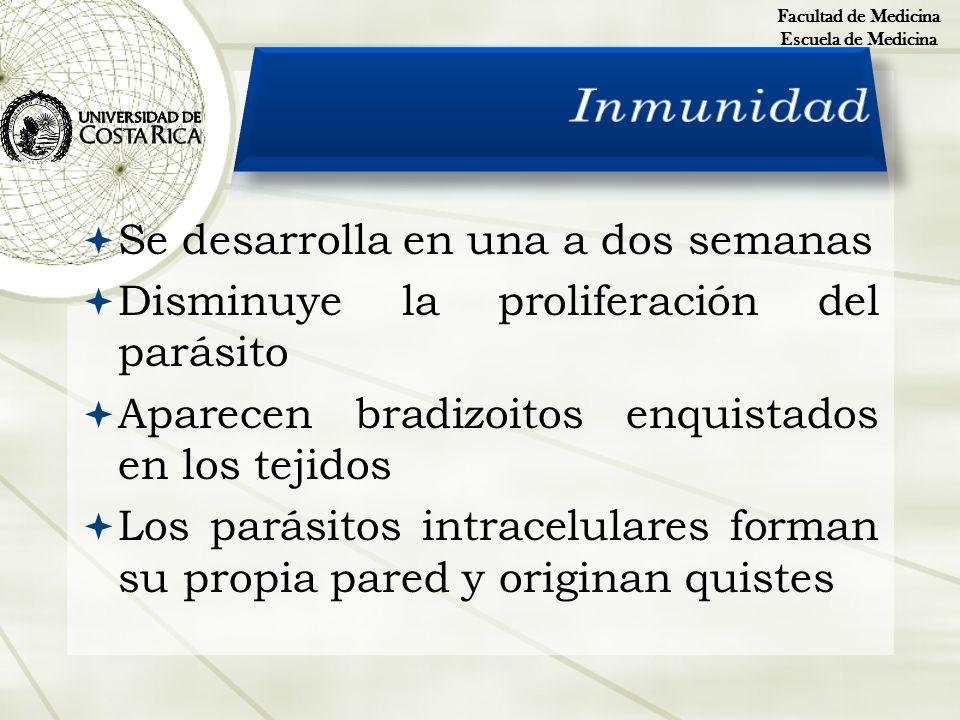 Se desarrolla en una a dos semanas Disminuye la proliferación del parásito Aparecen bradizoitos enquistados en los tejidos Los parásitos intracelulare