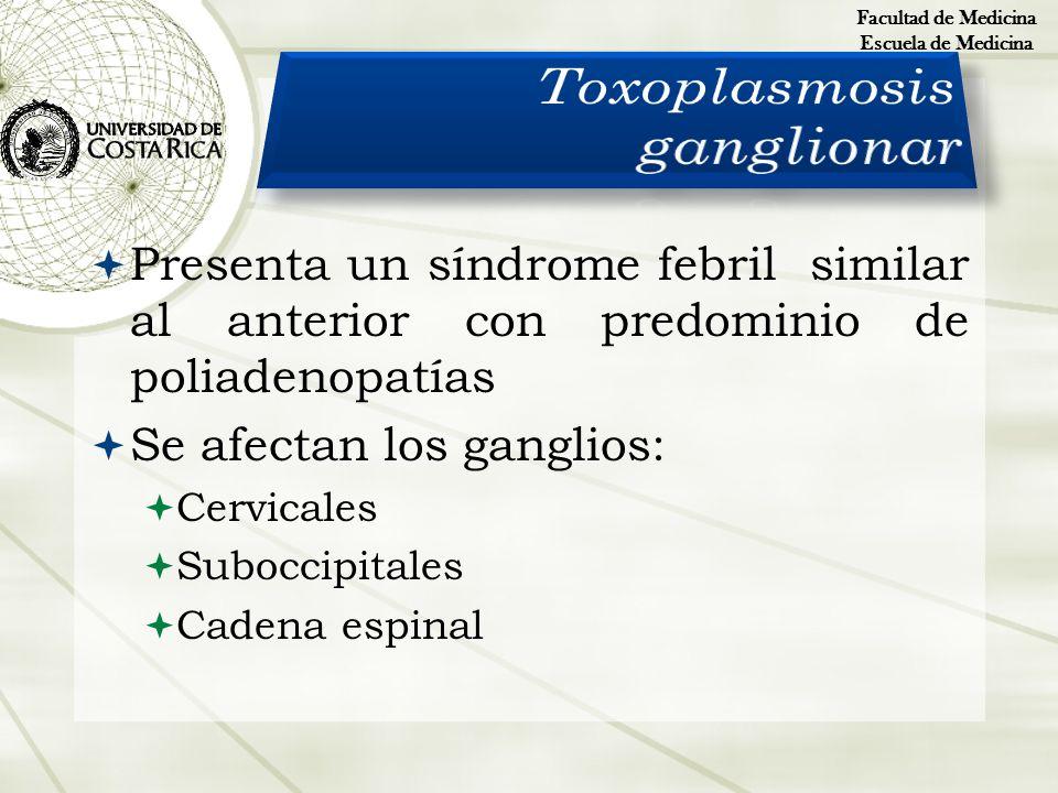 Presenta un síndrome febril similar al anterior con predominio de poliadenopatías Se afectan los ganglios: Cervicales Suboccipitales Cadena espinal Fa