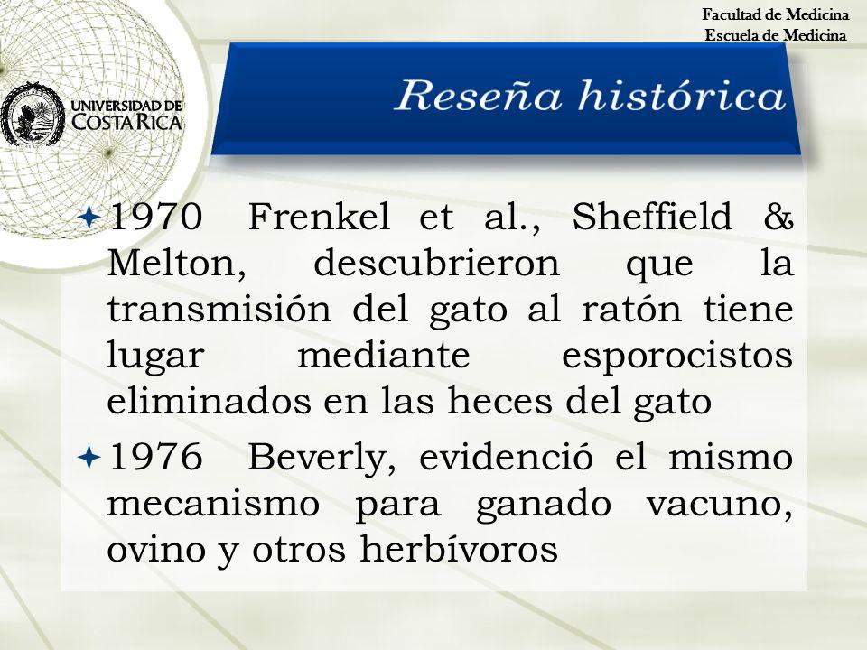 1970Frenkel et al., Sheffield & Melton, descubrieron que la transmisión del gato al ratón tiene lugar mediante esporocistos eliminados en las heces de