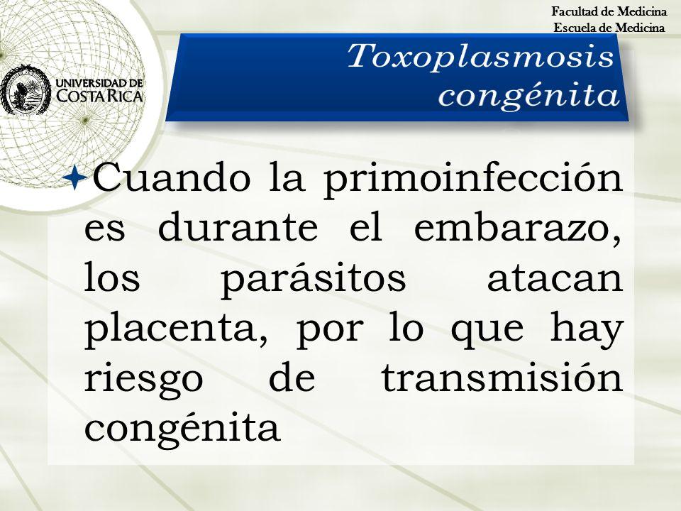 Cuando la primoinfección es durante el embarazo, los parásitos atacan placenta, por lo que hay riesgo de transmisión congénita Facultad de Medicina Es