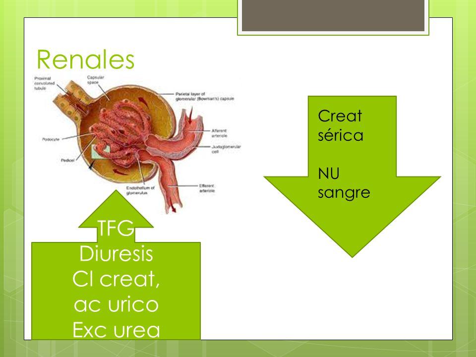 Renales TFG Diuresis Cl creat, ac urico Exc urea Creat sérica NU sangre