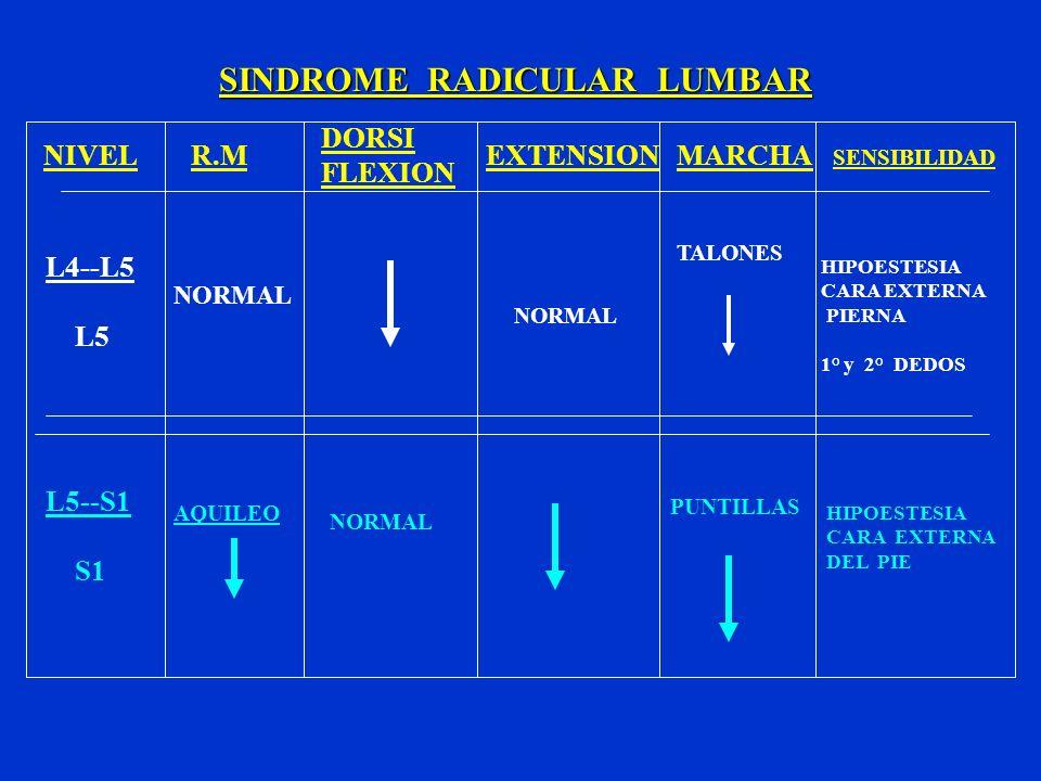 SINDROME RADICULAR LUMBAR NIVELR.M DORSI FLEXION EXTENSIONMARCHA SENSIBILIDAD L4--L5 L5 L5--S1 S1 NORMAL AQUILEO NORMAL TALONES PUNTILLAS HIPOESTESIA