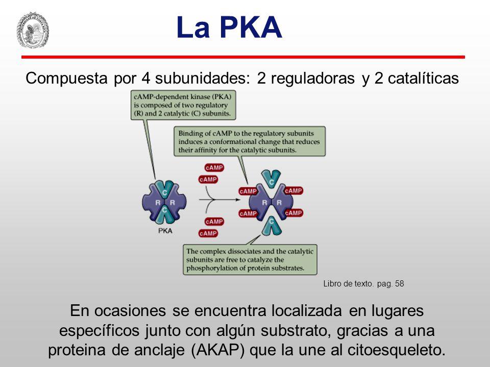 Regulación de la transcripción genética por el cAMP Libro de texto. pag. 93